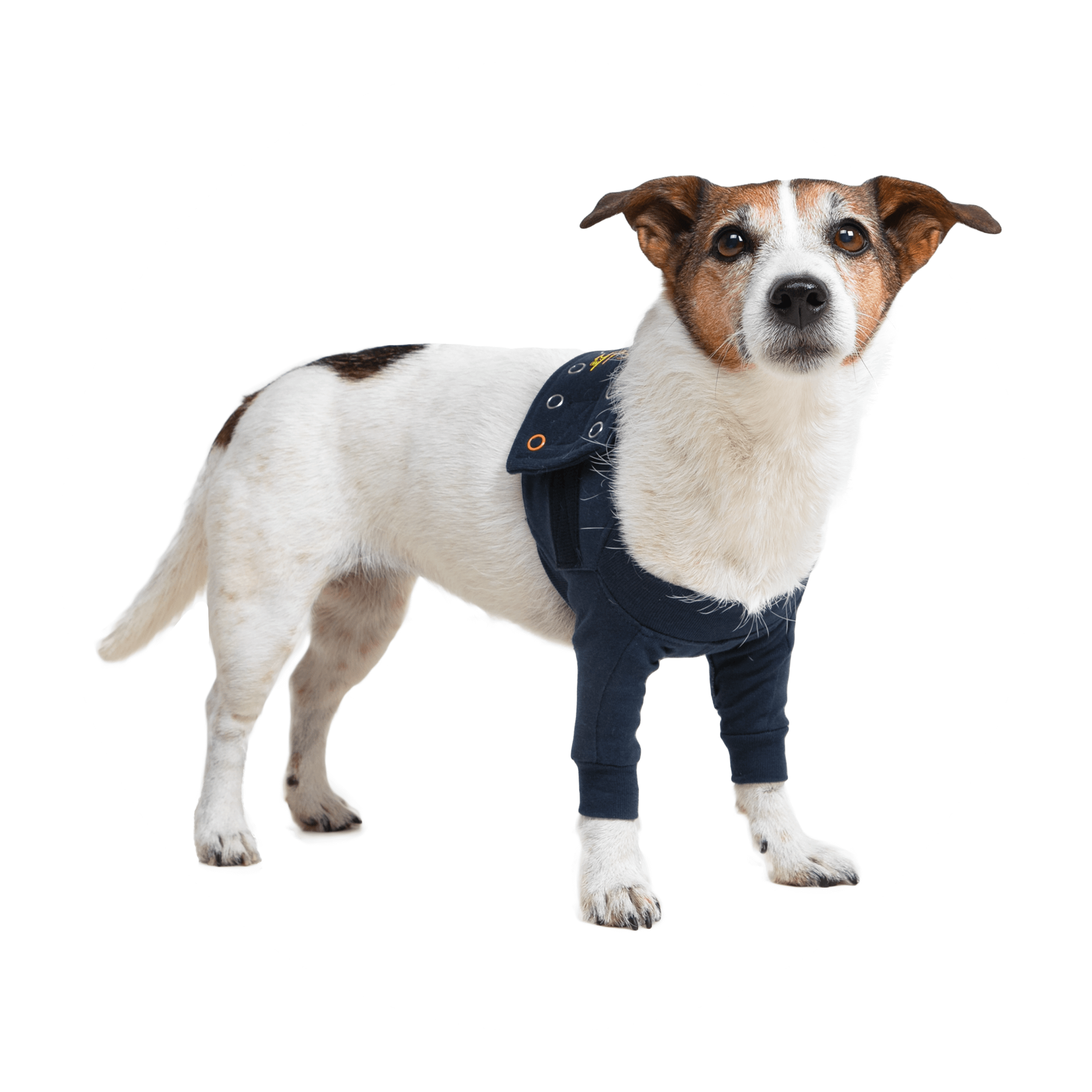 MPS-TAZ2® DOUBLE FRONT LEG SLEEVES HUND